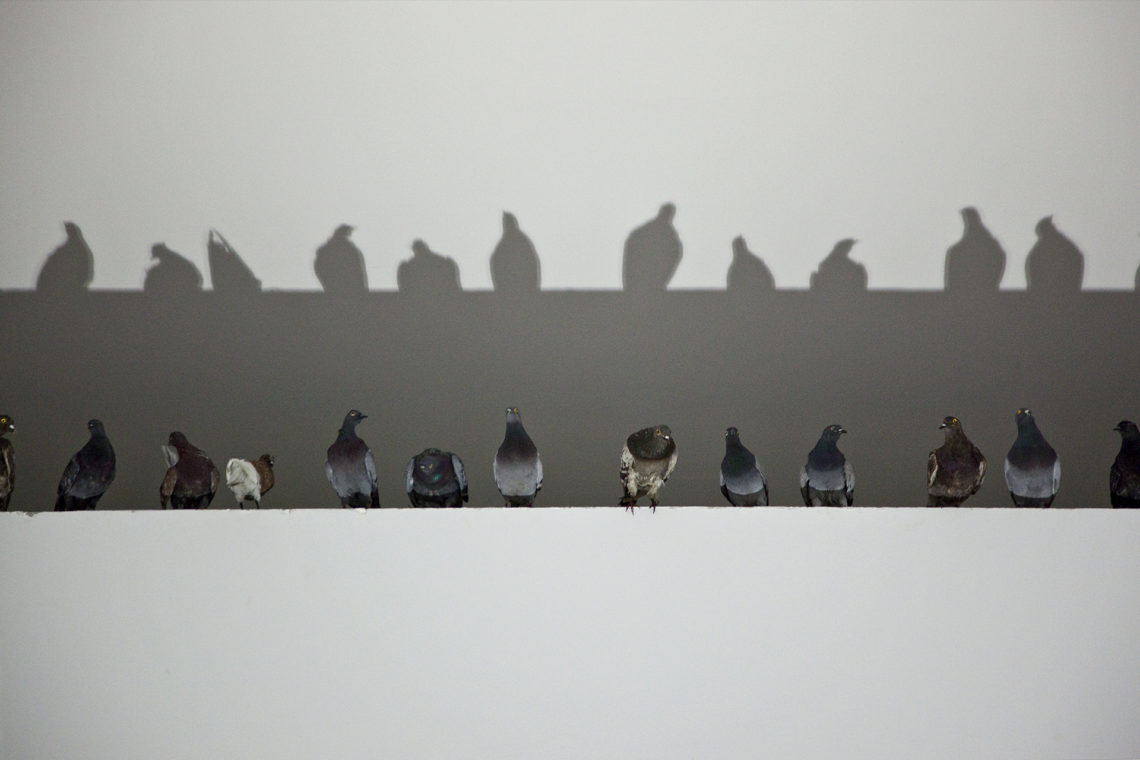 Maurizio Cattelan Others, 2011 Taxidermied pigeons Environmental dimensions Installation view, 54th Venice Biennale, 2011 Courtesy Maurizio Cattelan's Archive Photo Zeno Zotti