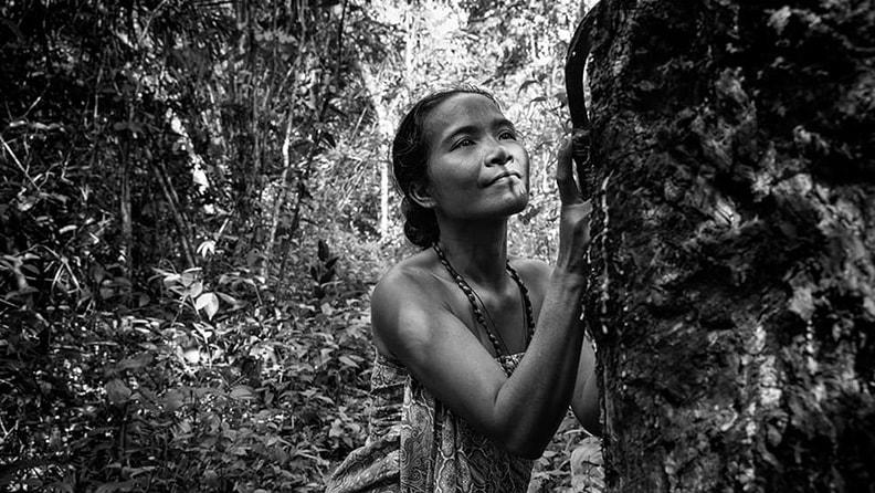 Dia da Árvore: o cuidado da Pirelli com as seringueiras 02